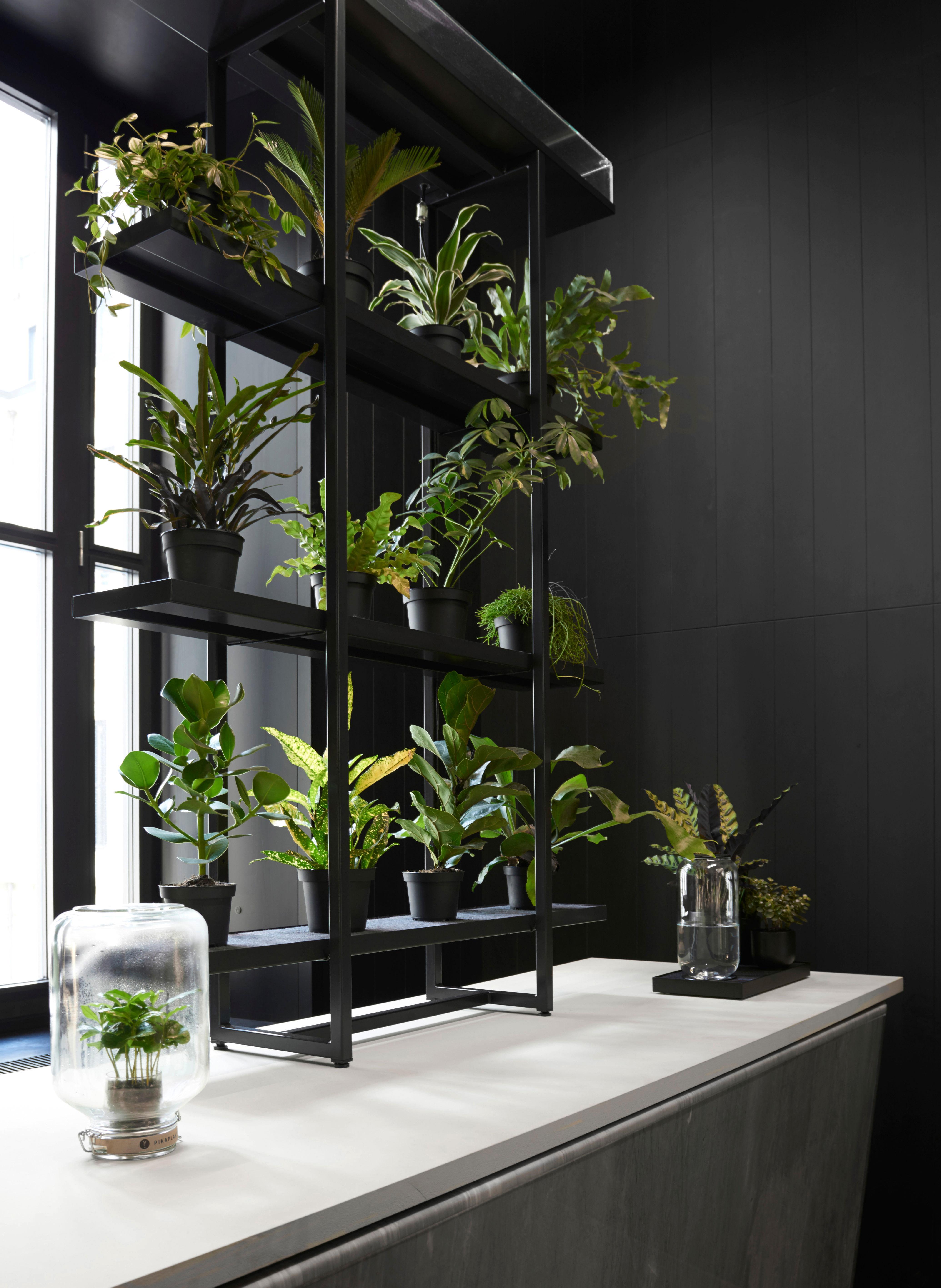 serre autonome jar mini caf ier inclus h 28 cm. Black Bedroom Furniture Sets. Home Design Ideas