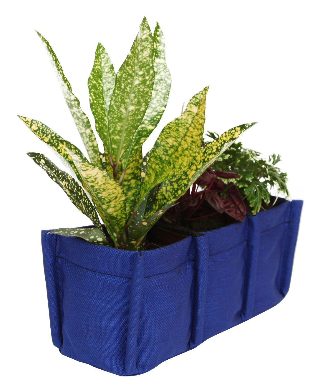 mini baclong 3 pflanzbereiche f r innen 3 5 l bacsac blumenkasten. Black Bedroom Furniture Sets. Home Design Ideas