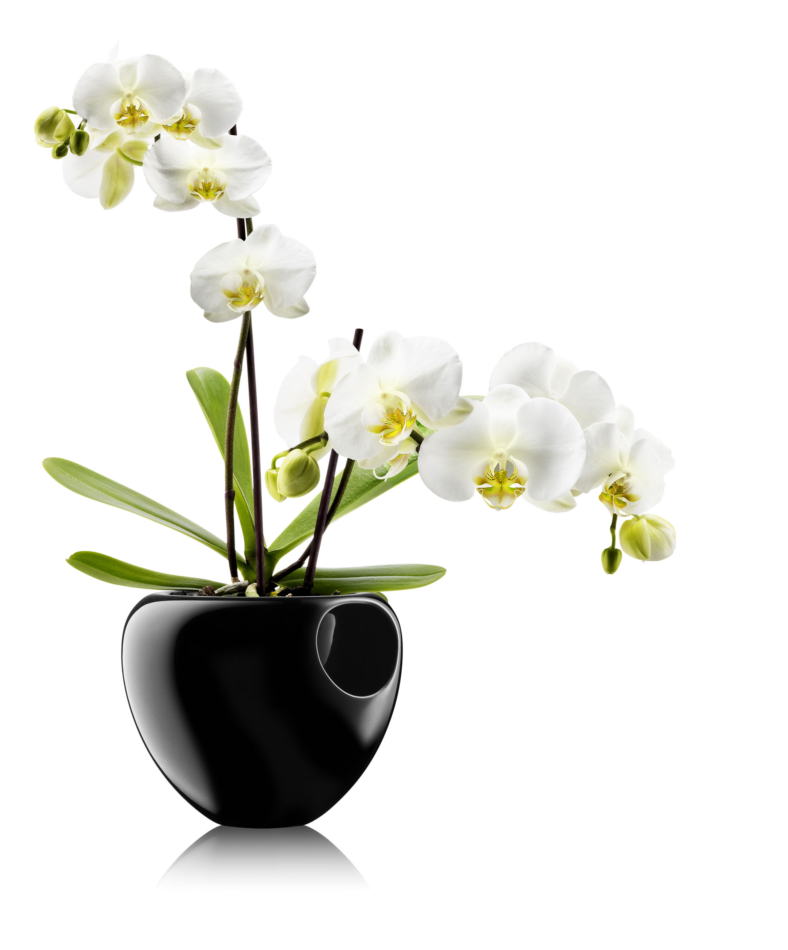 pot de fleurs pour orchid e avec r serve d 39 eau noir. Black Bedroom Furniture Sets. Home Design Ideas