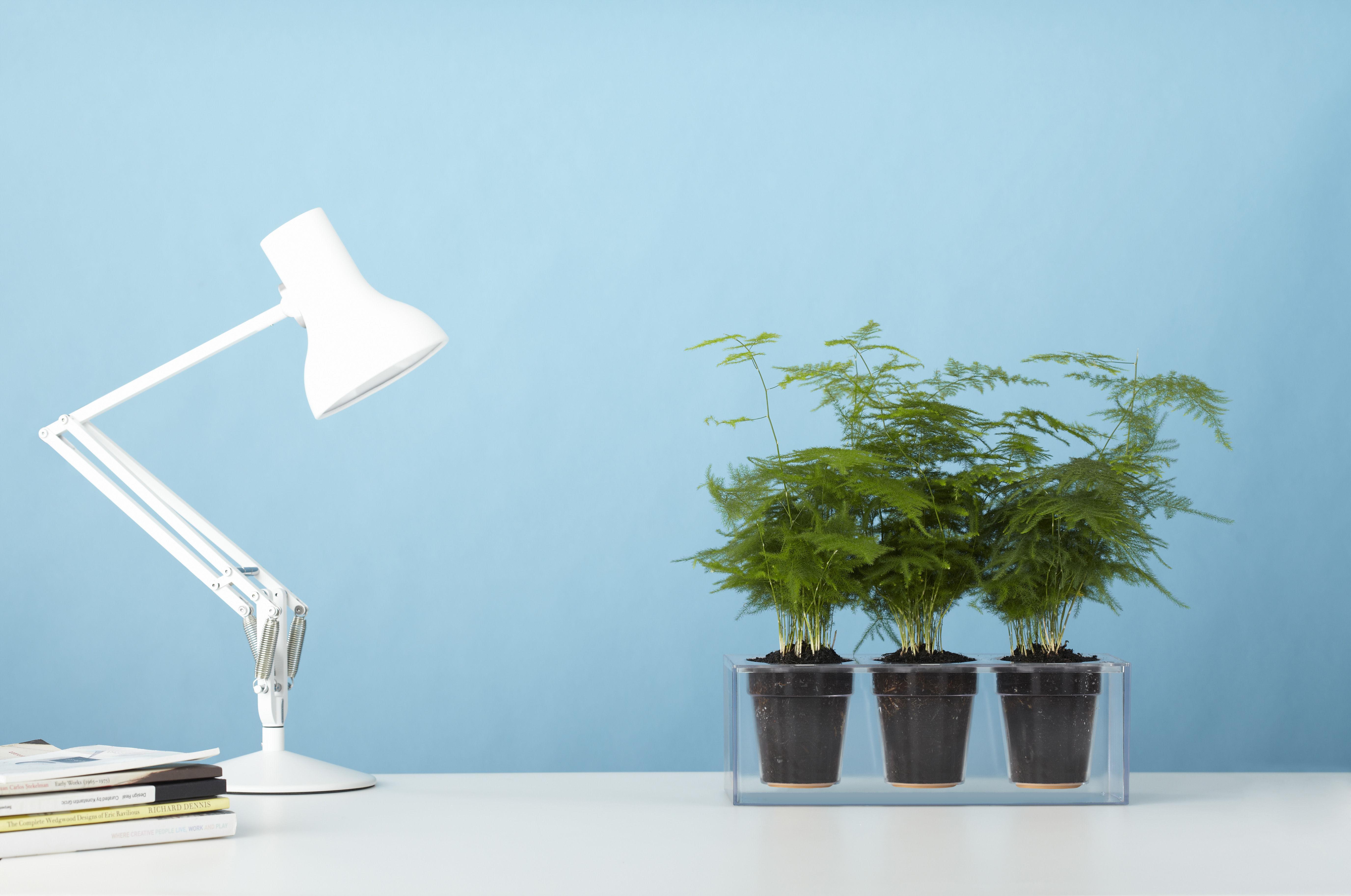 Scopri fioriera cube con riserva d 39 acqua per 3 piante for Acqua design italia
