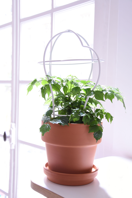 pot de fleurs outline avec tuteur grand mod le structure 5 structure 5 terracotta blanc. Black Bedroom Furniture Sets. Home Design Ideas