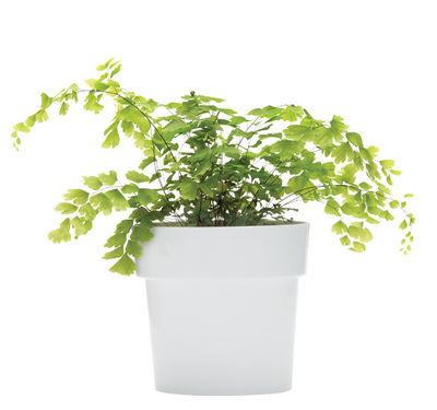 Pot de fleurs Slim / Ovale - Coupelle intégrée - Pa Design gris en matière plastique