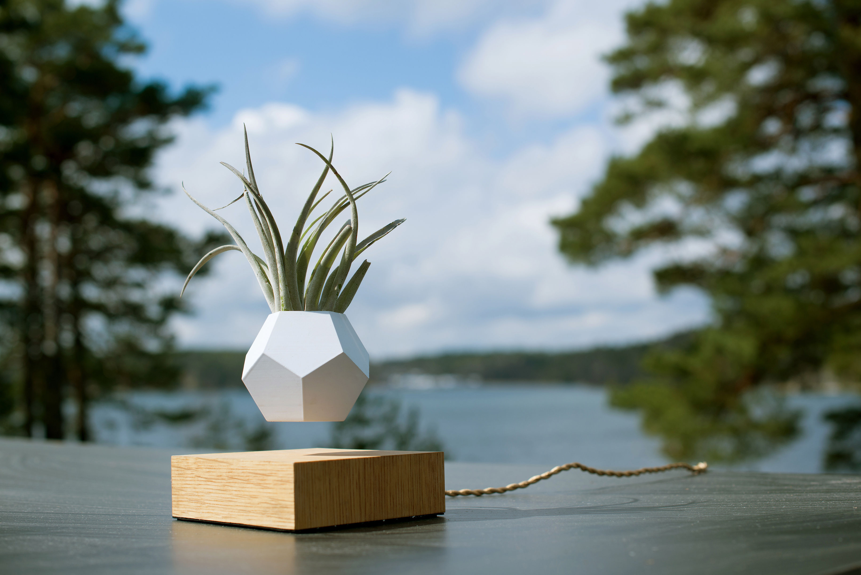 Lyfe Flowerpot - / Levitating pot White / Oak base by Flyte