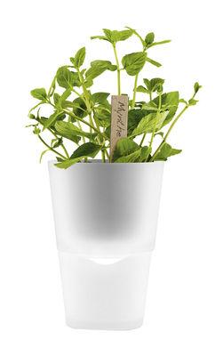 Image of vaso con riserva - con riserva d'acqua - Ø 11 cm - Vetro di Eva Solo - Trasparente - Vetro