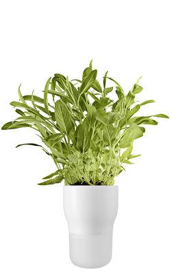 Image of Vaso da fiori con riserva d'acqua / Medium - Ø 11 x H 15 cm - Eva Solo - Traslucido,Bianco gesso - Vetro