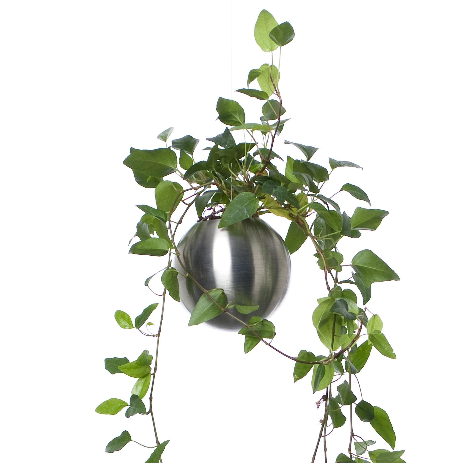 pot de fleurs sph re pot de fleur suspendu 12 cm 12 cm inox mat pa design made in design. Black Bedroom Furniture Sets. Home Design Ideas