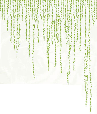 Dekoration - Stickers und Tapeten - Jungle Peas Sticker - Domestic - Grün - Vinyl