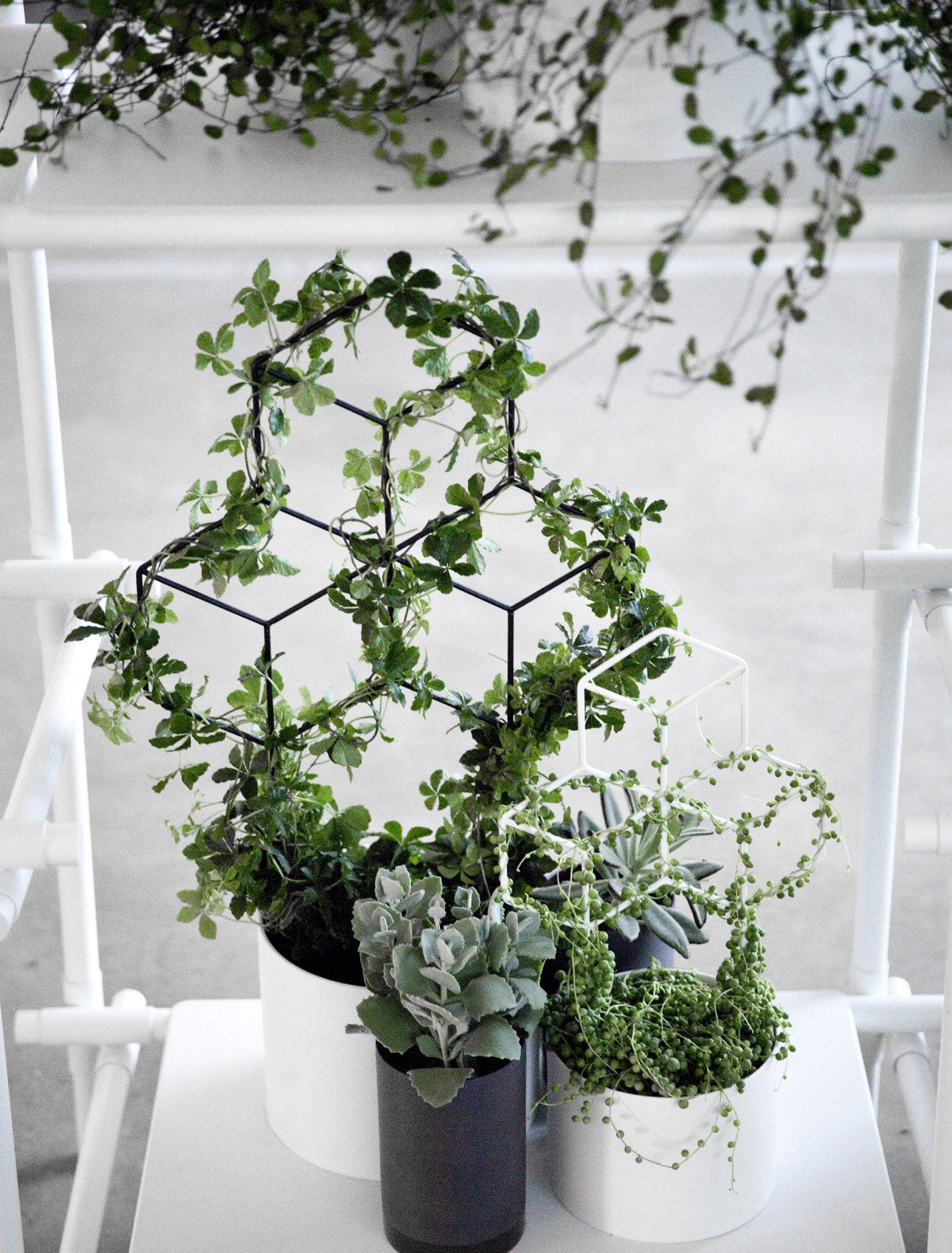 tuteur pov medium pour plantes grimpantes h 42 cm blanc menu. Black Bedroom Furniture Sets. Home Design Ideas