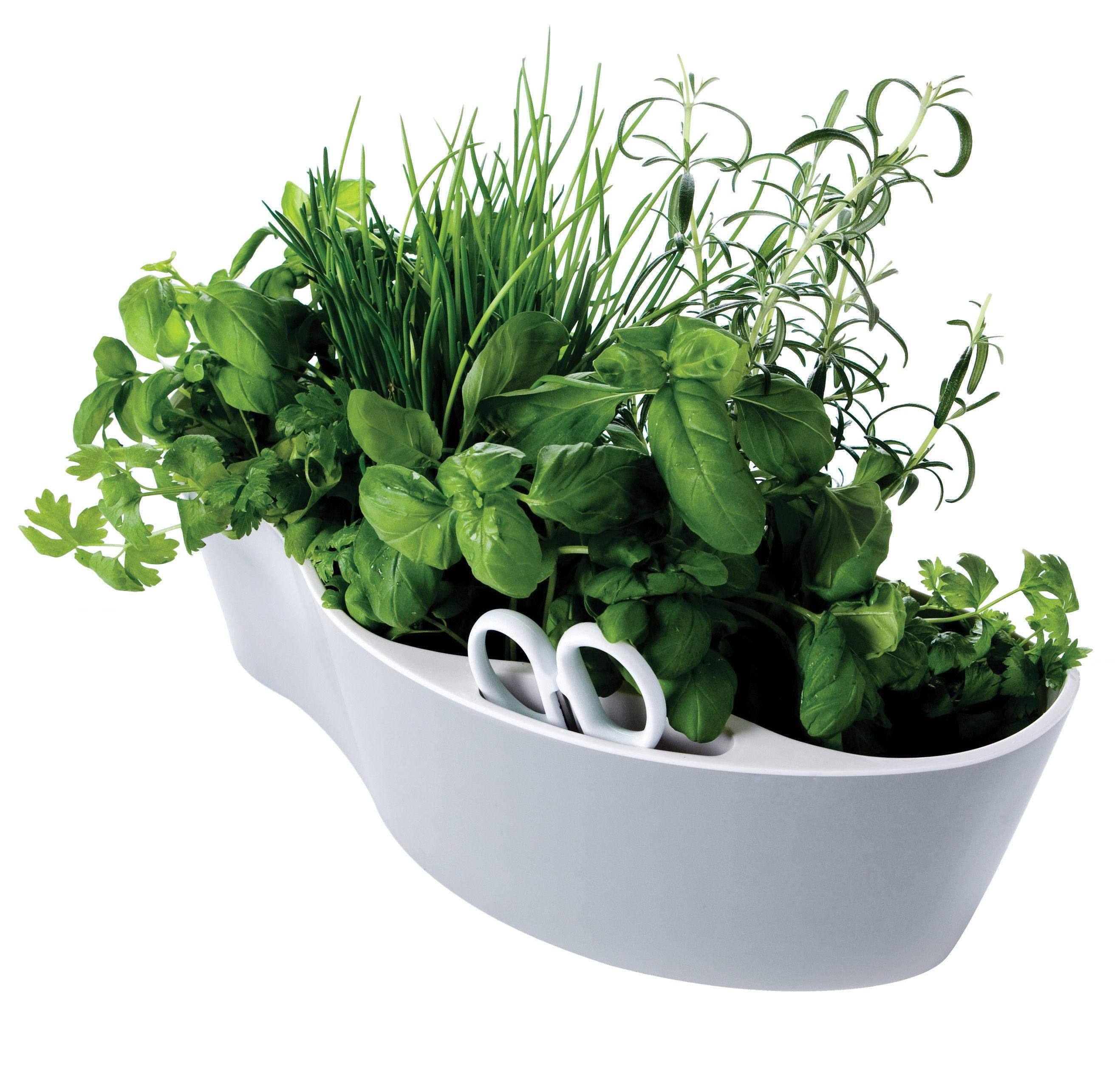 Pot de fleurs herb garden pour herbes aromatiques avec for Pot exterieur gris
