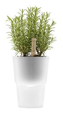 Image of vaso con riserva - con riserva d'acqua Ø 13 cm - Vetro di Eva Solo - Trasparente - Vetro