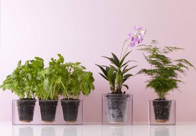 Scopri Fioriera Cube -con riserva d\'acqua - Per 3 piante ...