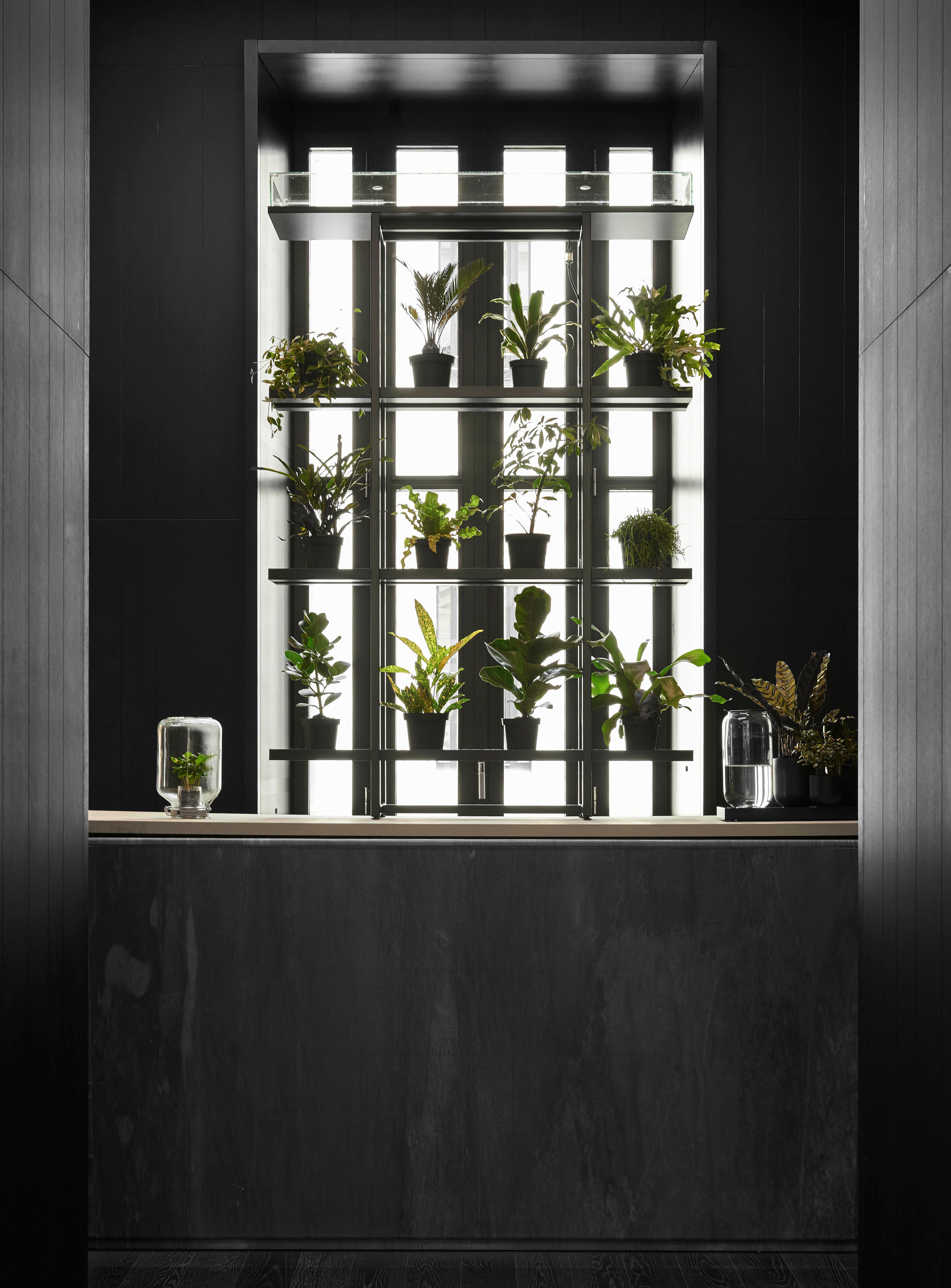 serre autonome jar mini caf ier inclus h 28 cm caf ier. Black Bedroom Furniture Sets. Home Design Ideas