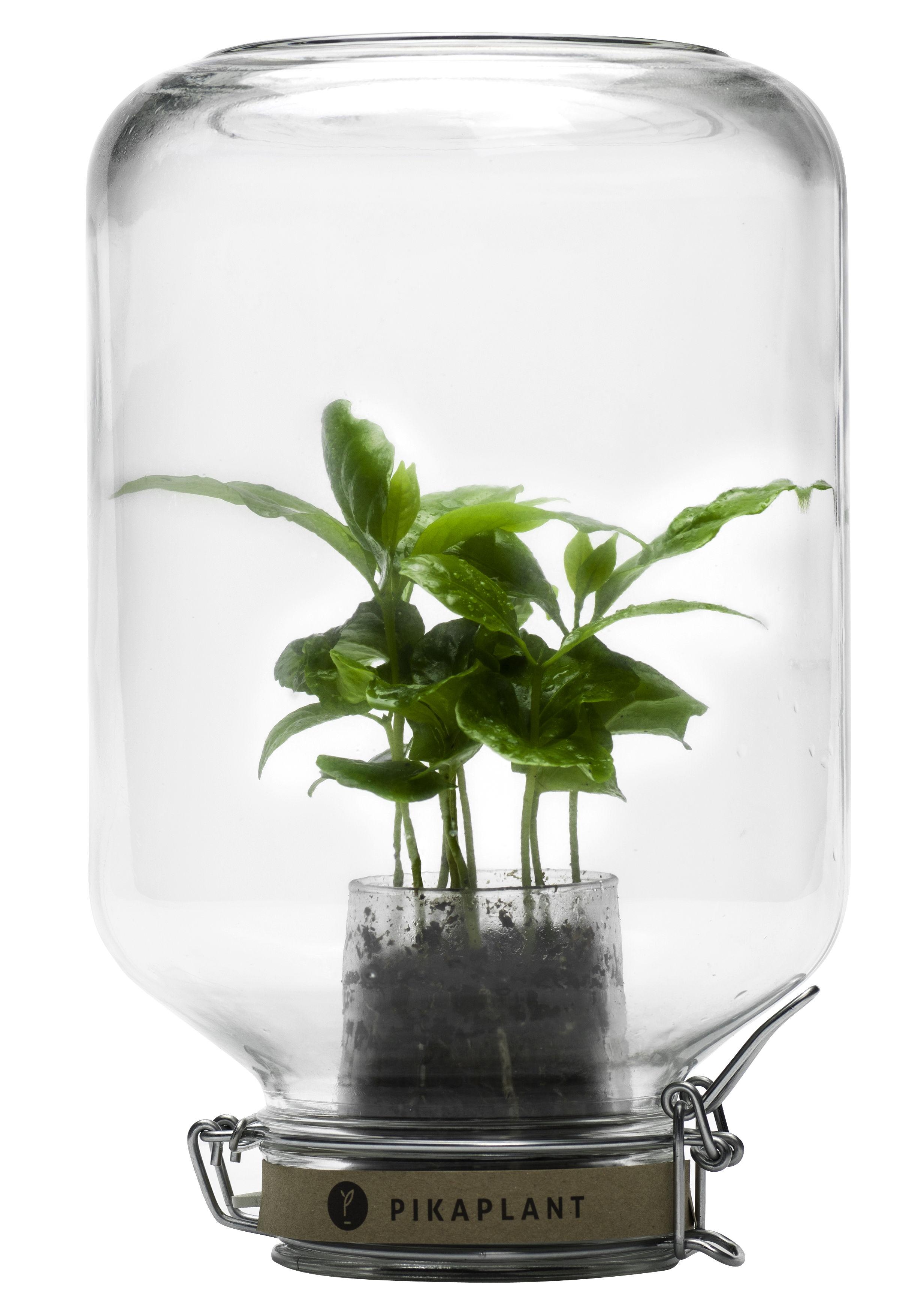Decoration - Flower Pots & House Plants - Jar Self-sufficient greenhouse - / Mini coffee bush included - H 28 cm by Pikaplant - Transparent - Glass, Rubber, Steel