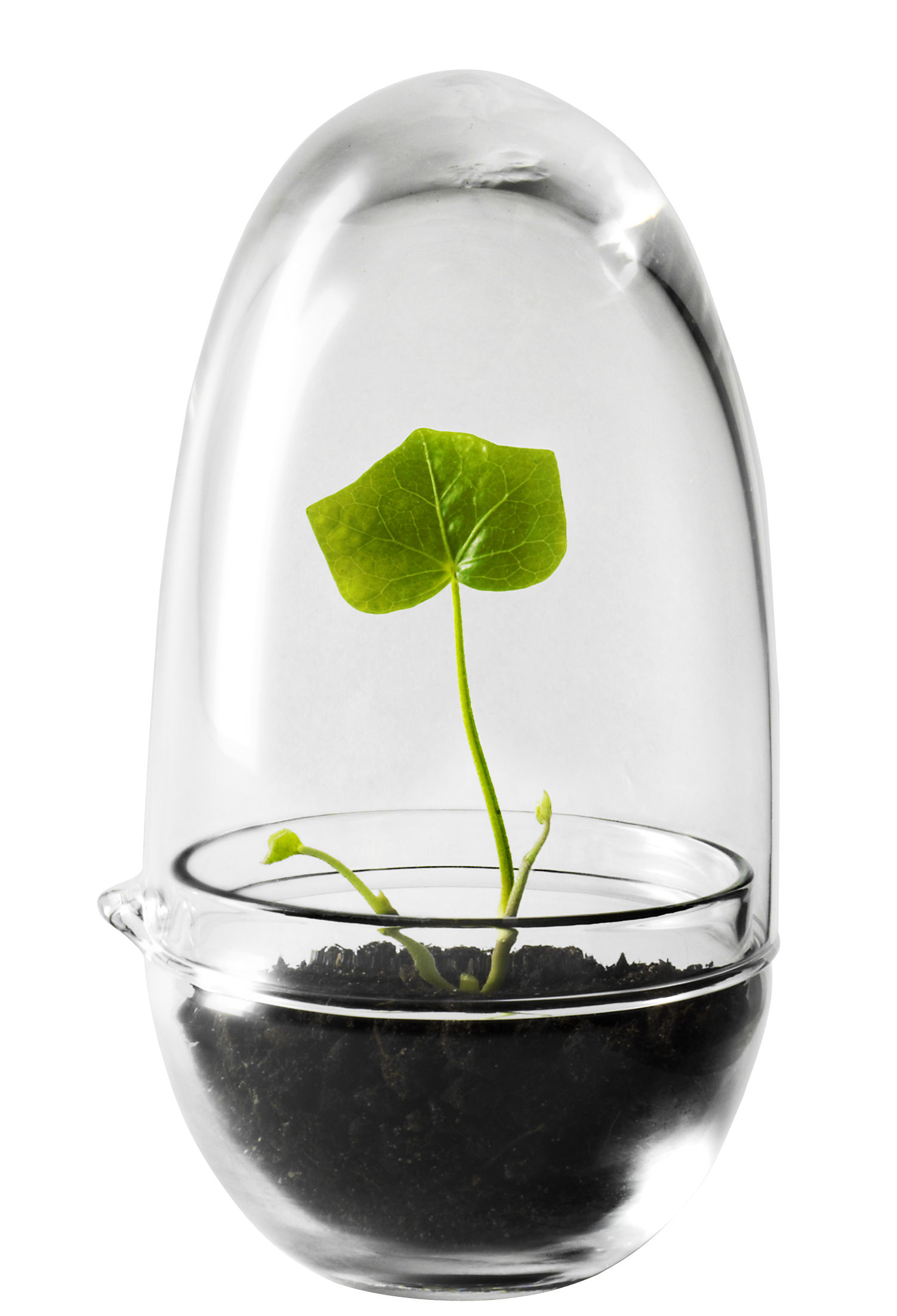 Decoration - Flower Pots & House Plants - Grow Greenhouse by Design House Stockholm - Transparent - Mouth blown glass