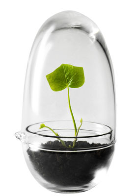Interni - Vasi e Piante - Mini serra Grow / Ø 8 x H 14 cm - Design House Stockholm - Trasparente - Vetro soffiato a bocca