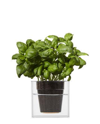 Image of Vaso per fiori Cube - Small con contenitore per l'acqua - 12 x 12 cm di Boskke - Trasparente - Materiale plastico