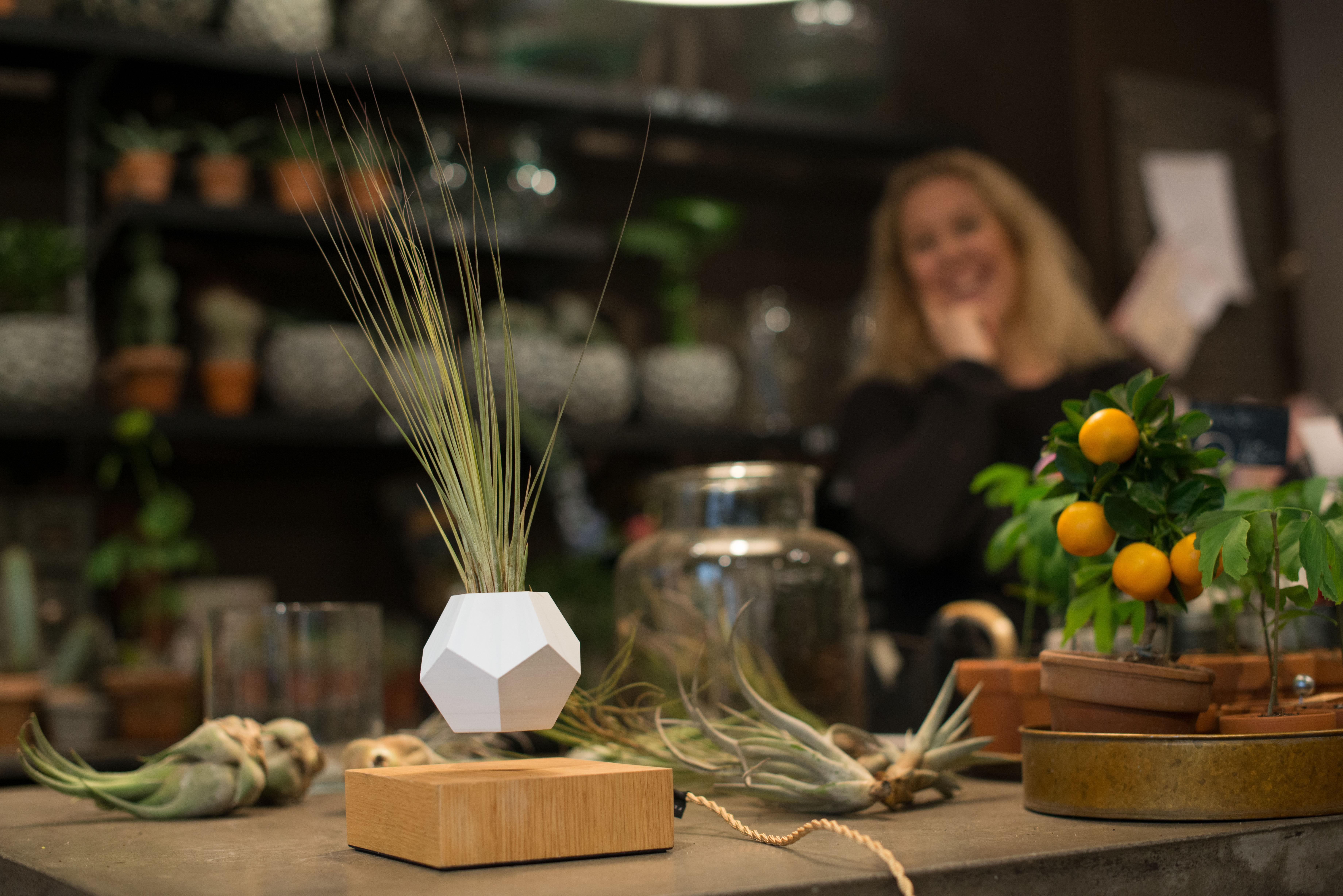 pot de fleur en levitation lyfe flyte blanc bois made. Black Bedroom Furniture Sets. Home Design Ideas