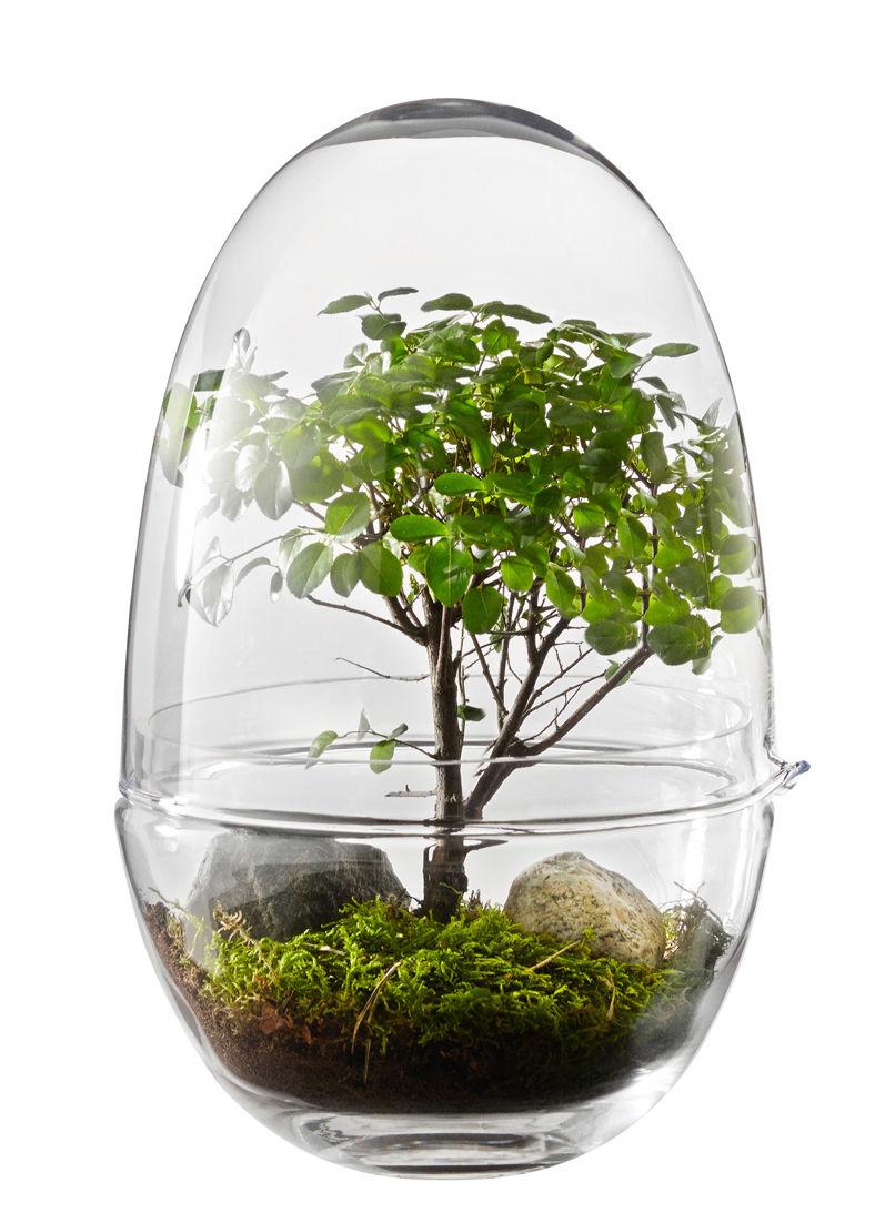 Interni - Vasi e Piante - Mini serra Grow X-Large - / Ø 20 x H 32 cm di Design House Stockholm - H 32 cm / Trasparente - Vetro soffiato a bocca