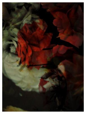 Tapis Seduction / 300 x 225 cm - Moooi Carpets rouge,noir en tissu