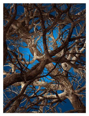 Liquid Maple Teppich / 400 x 300 cm - Moooi Carpets - Blau,Braun