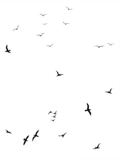 Interni - Sticker - Sticker Flock of Gulls di Domestic - Nero - Vinile