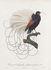 Tapis Calligraphy Bird / Ø 250 cm - Moooi Carpets