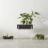 Botanic Tray Flowerpot - / Tray - 45 x 20 cm x H 4.8 cm by Design House Stockholm