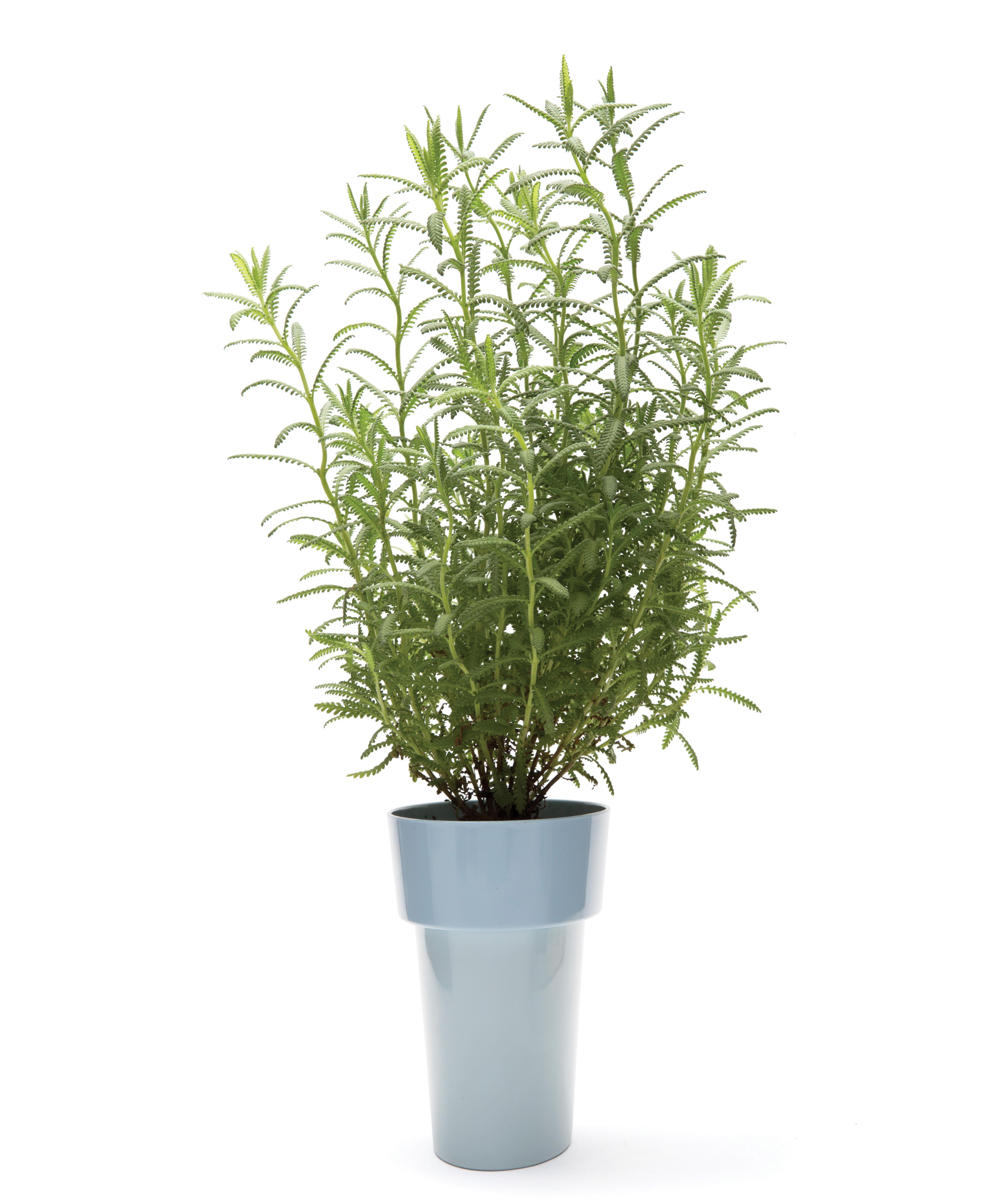 pot de fleurs slim ovale coupelle int gr e bleu pa design made in design. Black Bedroom Furniture Sets. Home Design Ideas