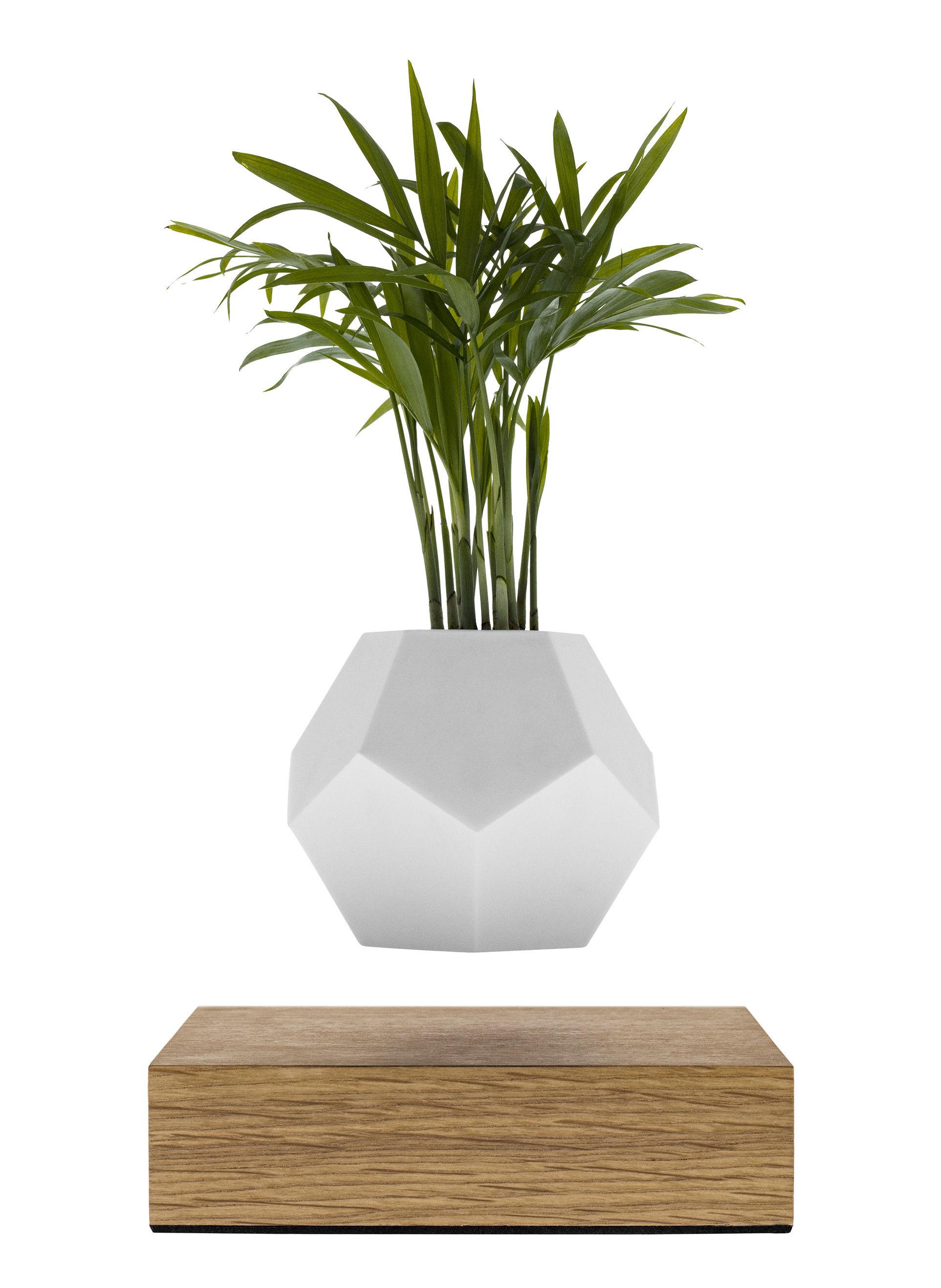 Déco - Pots et plantes - Pot de fleurs Lyfe / Pot en lévitation - Flyte - Blanc / Base chêne - Chêne, Silicone