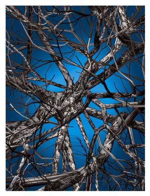 Liquid Birch Teppich / 400 x 300 cm - Moooi Carpets - Blau,Braun