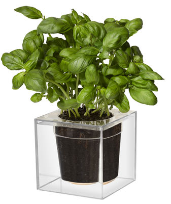 Outdoor - Töpfe und Pflanzen - Cube Blumentopf mit Wasserreservoir / groß, mit Wasserreservoir - 16 x 16 cm - Boskke - Transparent - Polykarbonat