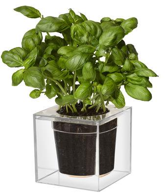 Outdoor - Vasi e Piante - Vaso per fiori Cube - Large con contenitore per l'acqua - 16 x 16 cm di Boskke - Trasparente - policarbonato