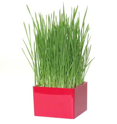 Outdoor - Pots et plantes - Pot de fleurs Mini Green pot à herbes - Racine Carré - Framboise - Acrylique