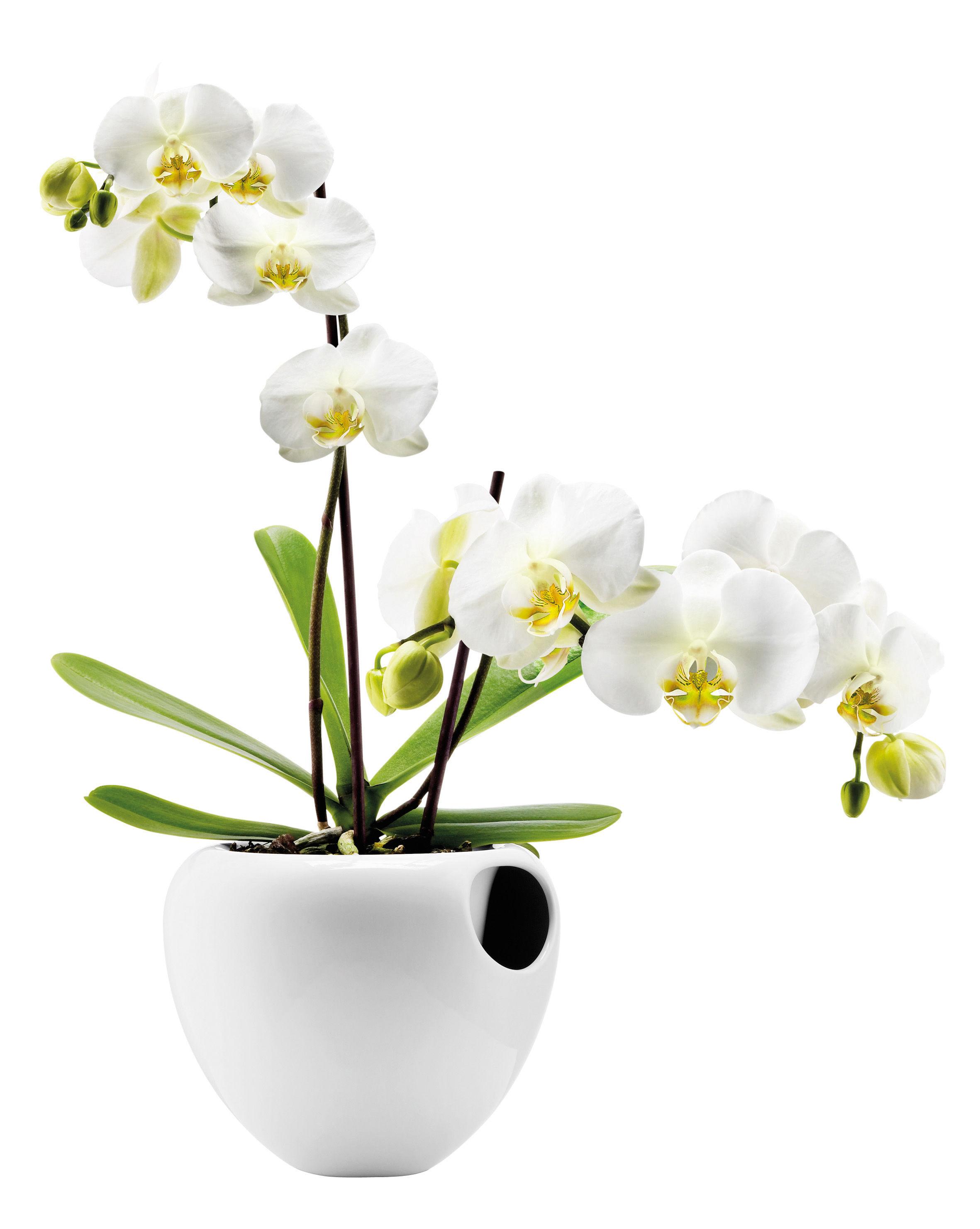 Outdoor - Vasi e Piante - vaso con riserva - per orchidee - Con serbatoio d'acqua di Eva Solo - Bianco - Maiolica