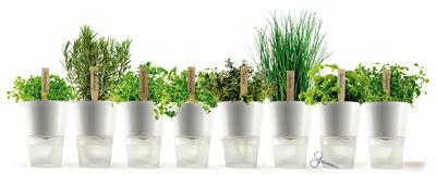 Cuisine - Pratique & malin - Pot à réserve d'eau / Ø 11 cm - Version céramique - Eva Solo - Petit - Anthracite - Céramique, Verre