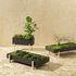 Botanic Tray Blumentopf / Tischplatte - 45 x 20 cm x H 4,8 cm - Design House Stockholm