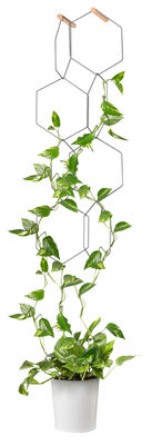 Decoration - Flower Pots & House Plants - Anno Trellis - / Modular - Set of 8 metal rings - Hexagon by Compagnie - Black / Beechwood hooks - Beechwood, Steel