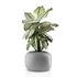Stone Flowerpot - / Ø 19 cm - Ceramic by Eva Solo