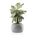 Pot de fleurs Stone / Ø 19 cm - Céramique - Eva Solo