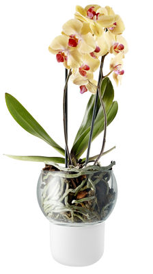 Dekoration - Töpfe und Pflanzen - Blumentopf mit Wasserreservoir groß Ø 15 cm / für Orchideen - Eva Solo - Groß Ø 15 cm / weiß - mundgeblasenes Glas, Verre acidé