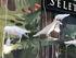 Lampe de table Bird Waiting / Corbeau immobile - Seletti