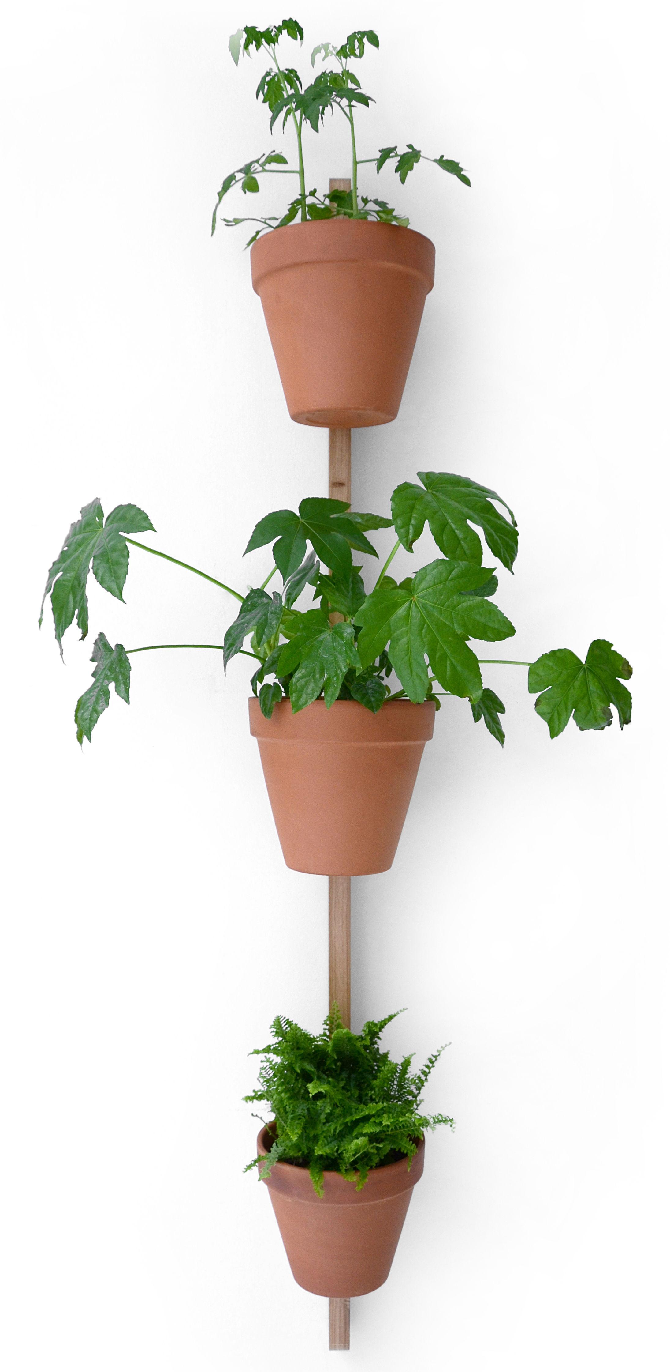 Interni - Vasi e Piante - Supporto murale XPOT - / Per 3 vasi di fiori  - H 150 cm di Compagnie - Legno chiaro - Rovere massello