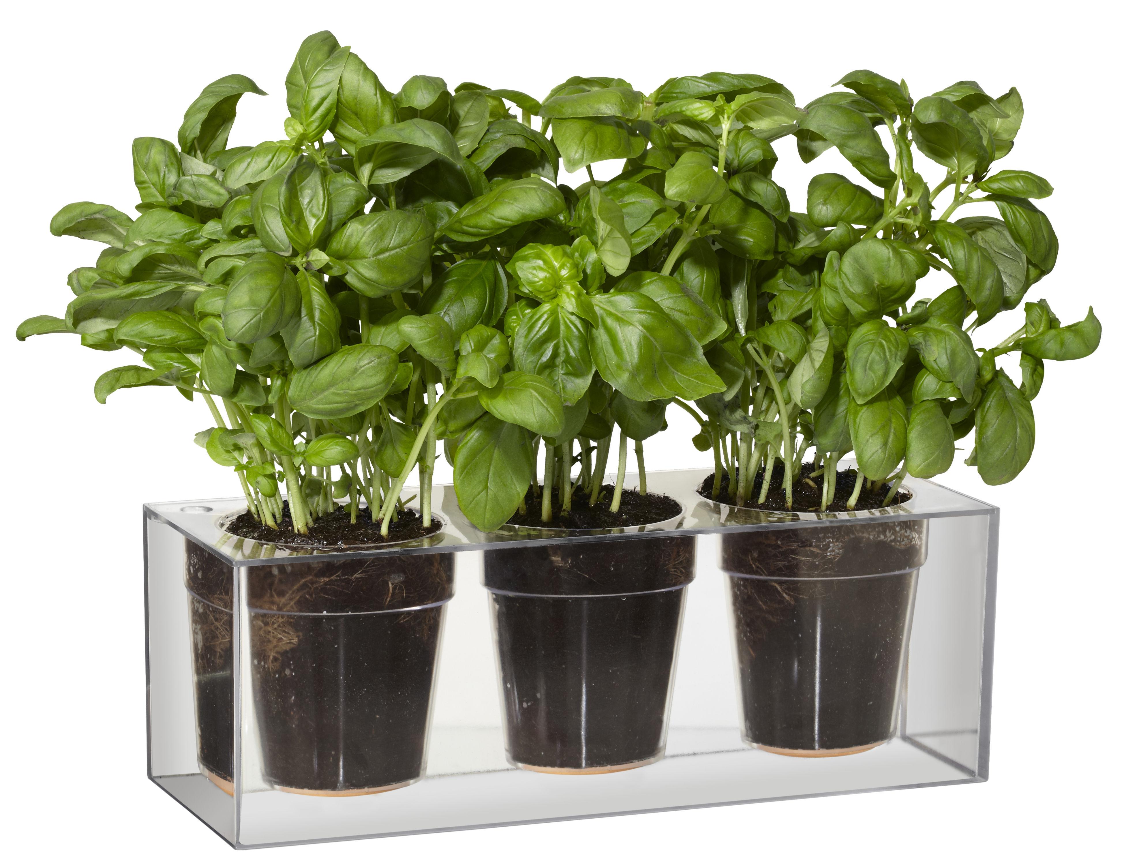Jardin - Pots et plantes - Jardinière à réserve d'eau Cube / Pour 3 plantes - Boskke - Transparent - Polycarbonate