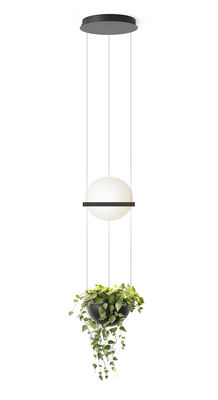 Lighting - Wall Lights - Palma Pendant - / Verticale & jardinière by Vibia - Laqué graphite mat - Aluminium, Opalin mouth blown glass, PMMA