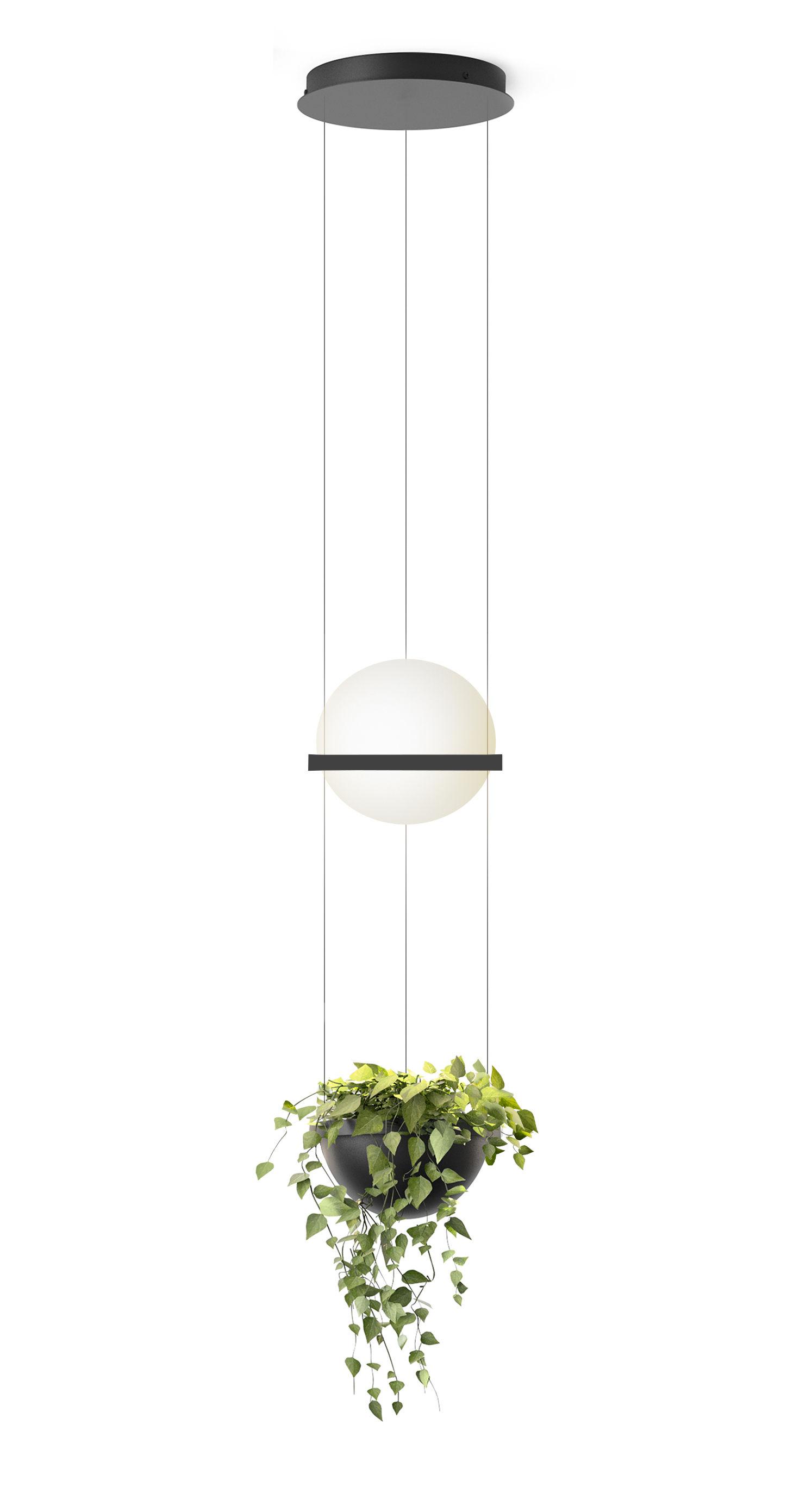 Lighting - Wall Lights - Palma Pendant - / Vertical & planter by Vibia - Matte graphite lacquer - Aluminium, Opalin mouth blown glass, PMMA