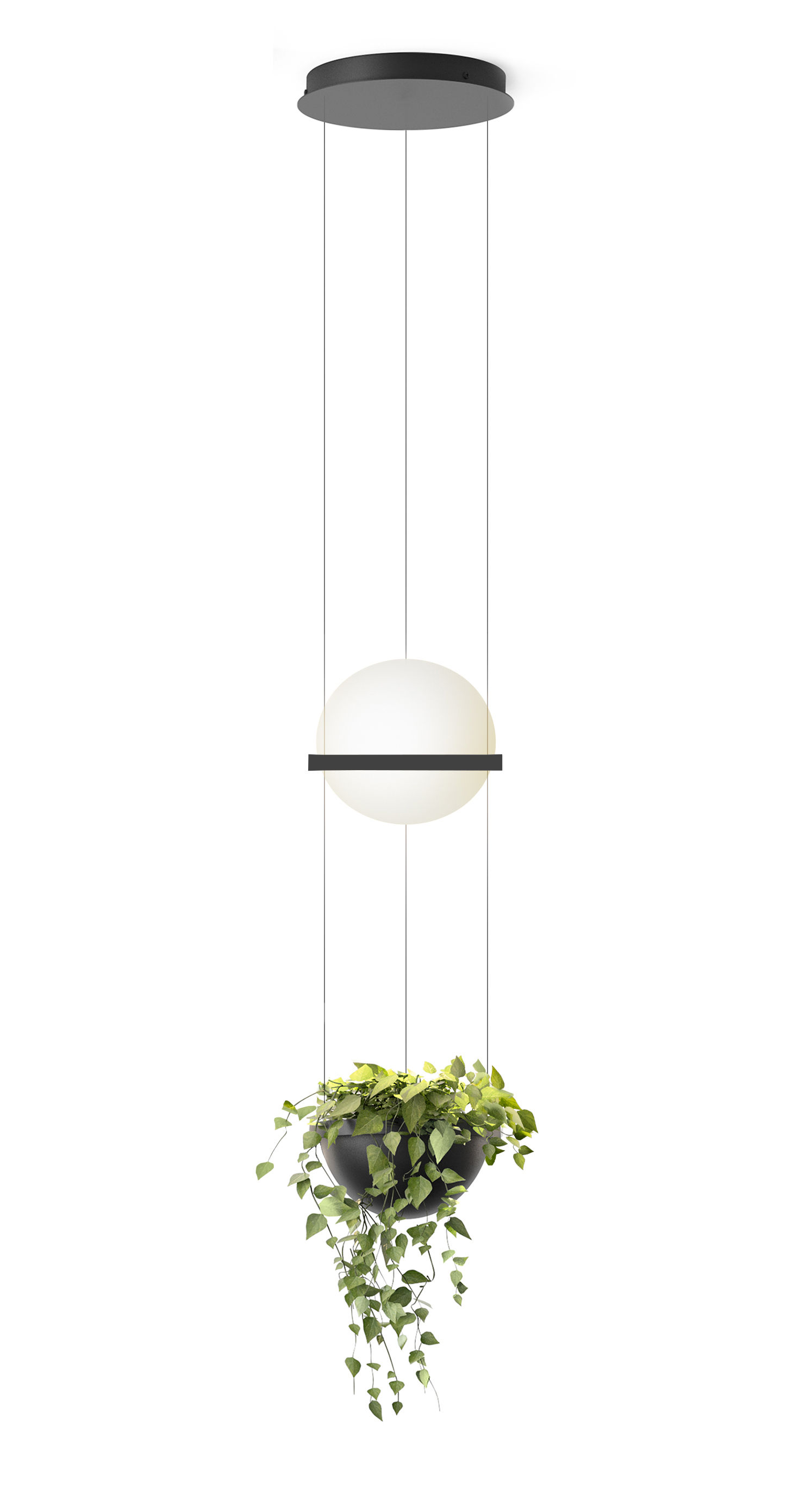 Luminaire - Appliques - Suspension Palma / Verticale & jardinière - Vibia - Laqué graphite mat - Aluminium, PMMA, Verre soufflé opalin