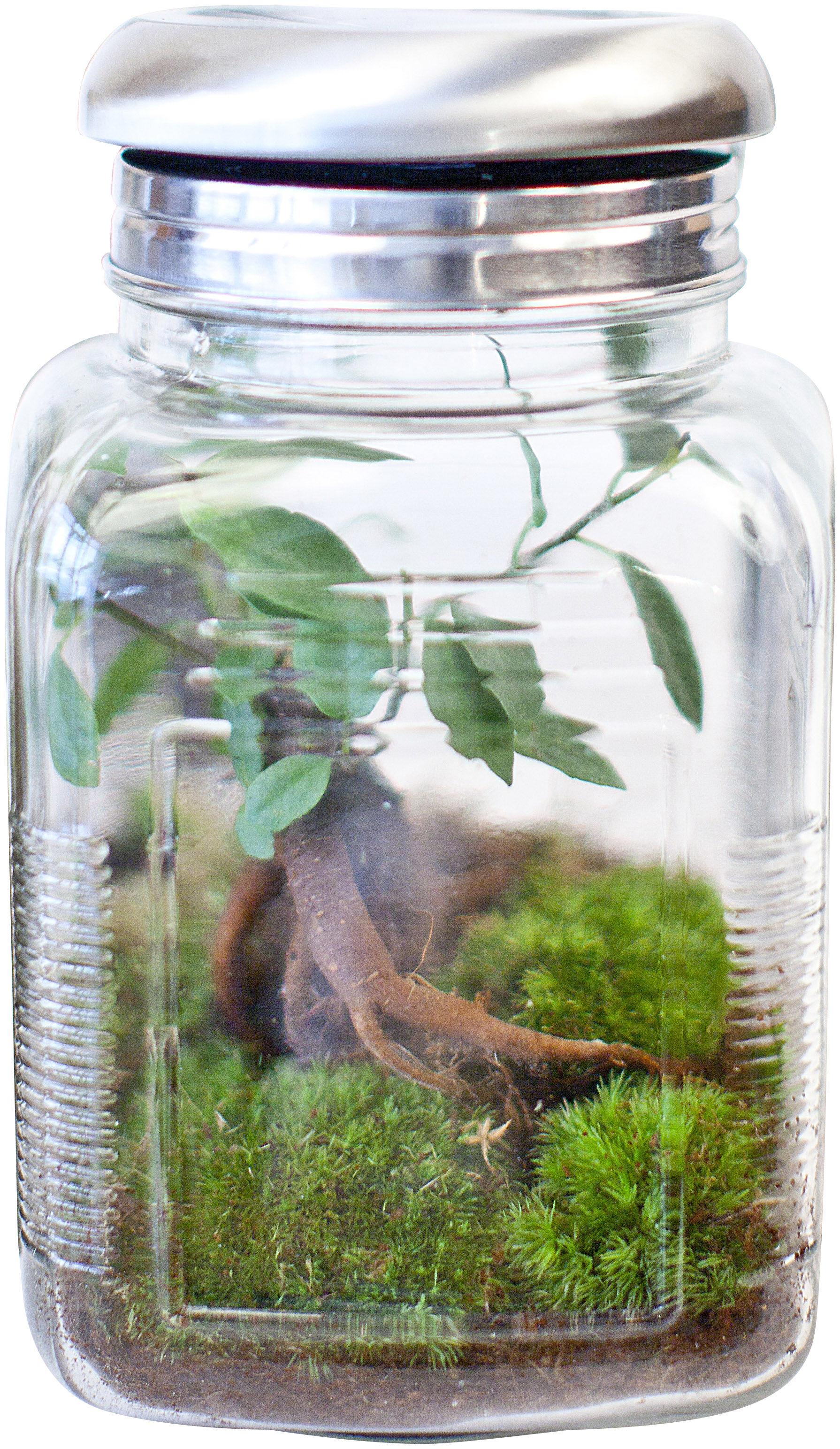 Treeki Sein Ficus Solarbetrieb Green Factory Mini Serre Autonome