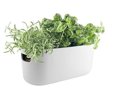 Pot à réserve d'eau Herb / Bac à herbes aromatiques - Céramique - Eva Solo blanc en céramique