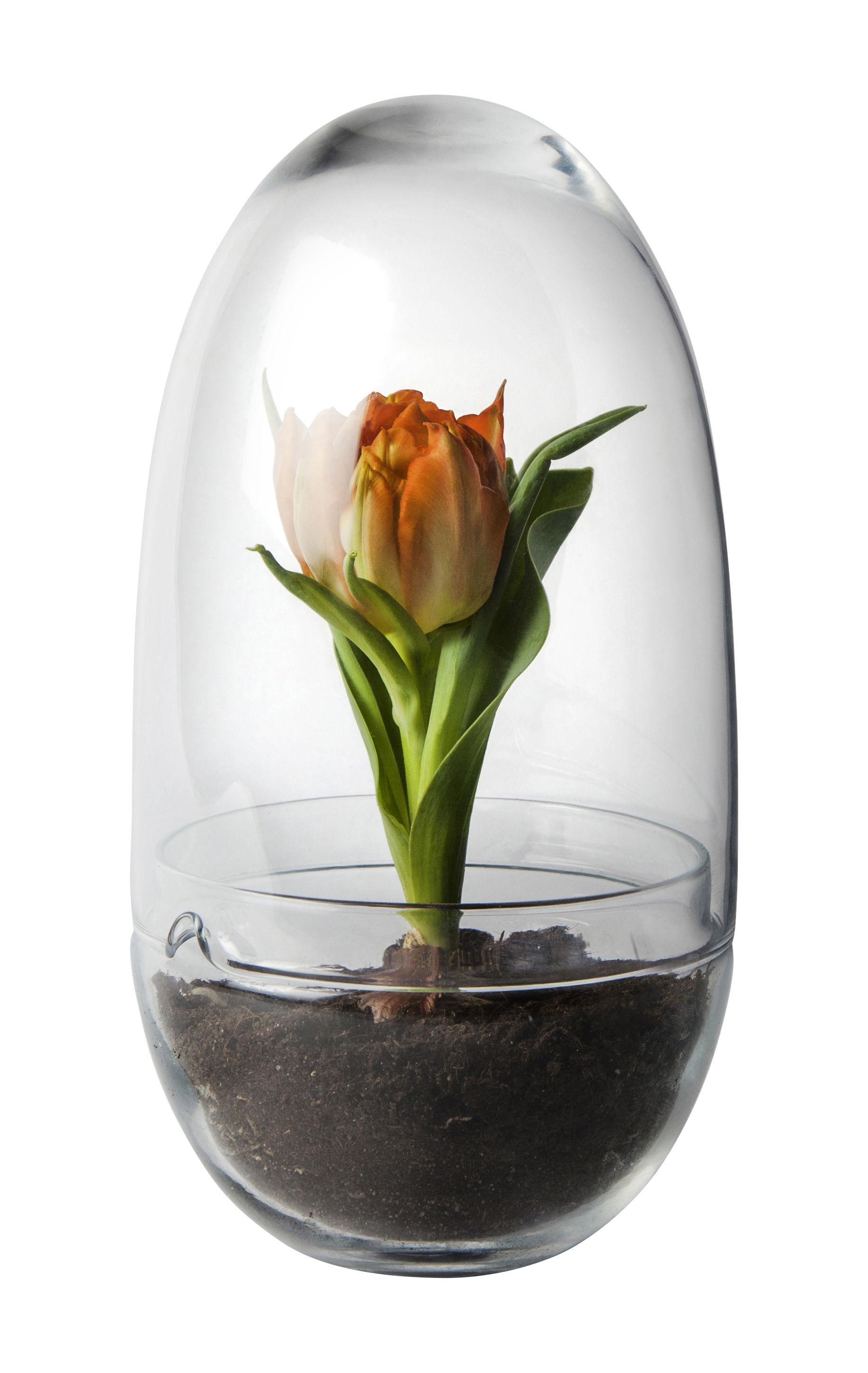 Decoration - Flower Pots & House Plants - Grow Large Greenhouse - / Ø 12 x H 24 cm by Design House Stockholm - H 23 cm / Transparent - Mouth blown glass
