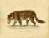 Tapis Bearded Leopard 1 / Large - 206 x 249 cm - Moooi Carpets